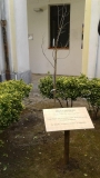 Un albero per Irena Sendler (Campagna)